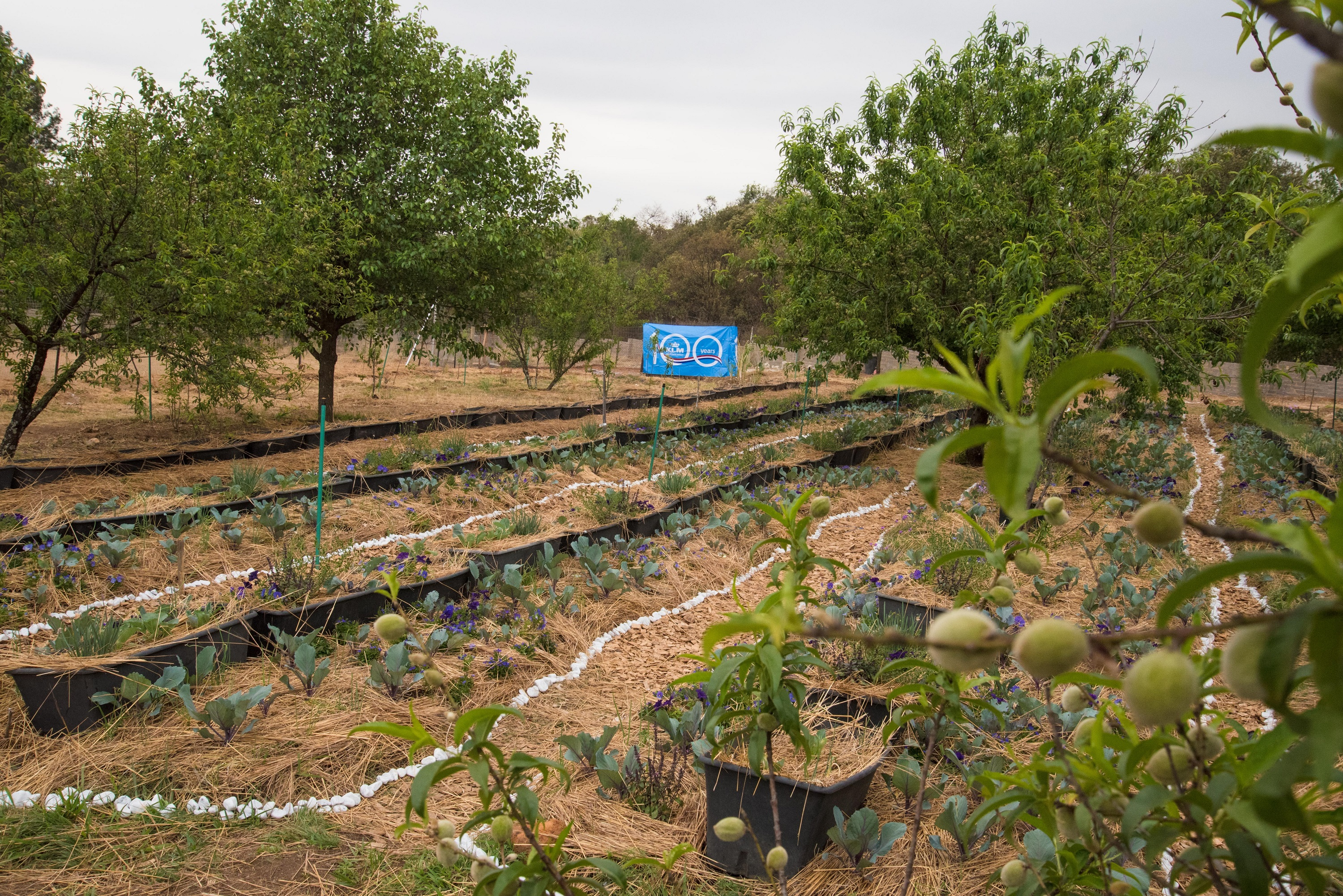 Food Forest 1